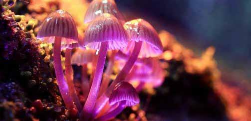 Ингредиент волшебных грибов «снимает неизлечимую депрессию»
