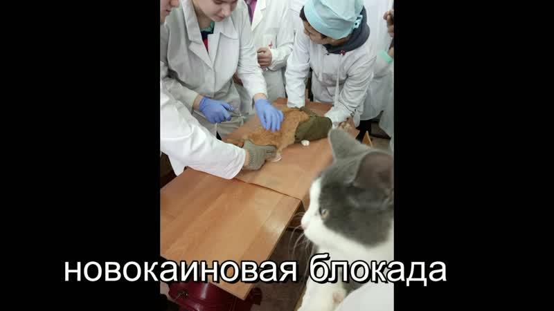 ВНБ 20.02.19 Новокаиновая блокада
