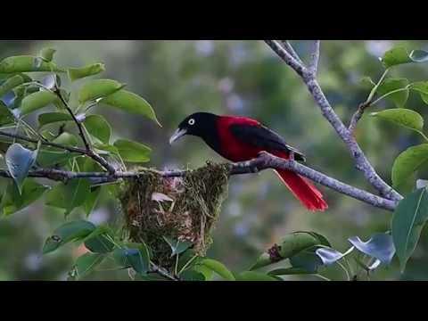 KEREN ● Video Margasatwa Hewan dan Burung yang Cantik