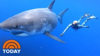 Ocean Ramsey Shares Exclusive Video Of Swimming With Massive Great White Shark | TODAY