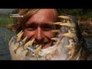 На крючке. Рыбы вампиры. Рыбы с большими зубами. National Geographic