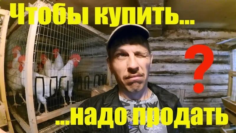 Чтобы что то купить надо что то продать Новости ЛПХ Жизнь в деревне
