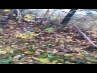 Последствия масштабной утечки нефтепродуктов в Хабаровском крае сняли на видео