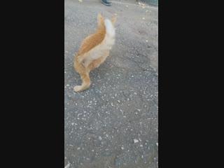 Котик с Безенчука