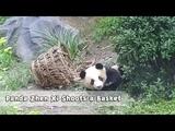 Zhen Xi Oops! My plan was to rush in nannys arms, not to shoot a basket! iPanda