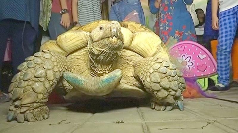 Огромной черепахе в зоопарке Карачи - 50 лет