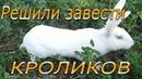 Выбор породы кроликов для домашнего хозяйства