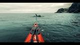 Косатки против морских каякеров Whales vs Sea-kayaker