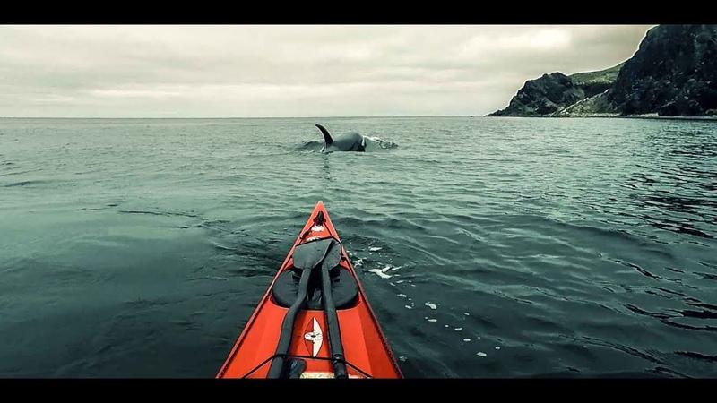 Косатки против морских каякеров / Whales vs Sea-kayaker