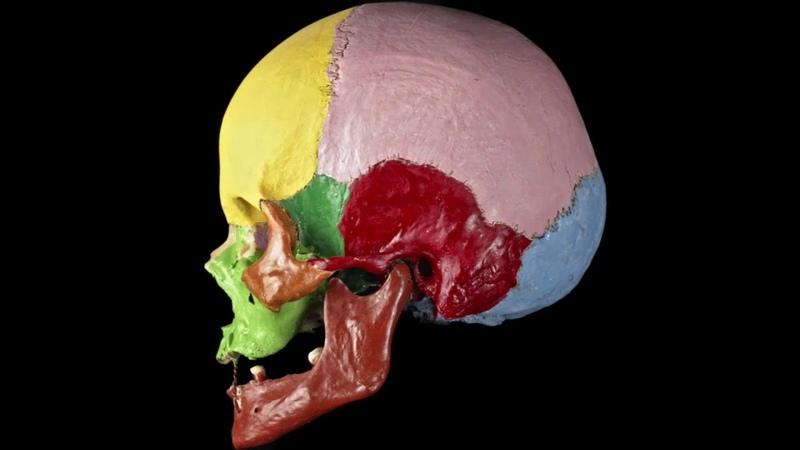 Обзор черепа. Анатомия человека МТА - 1