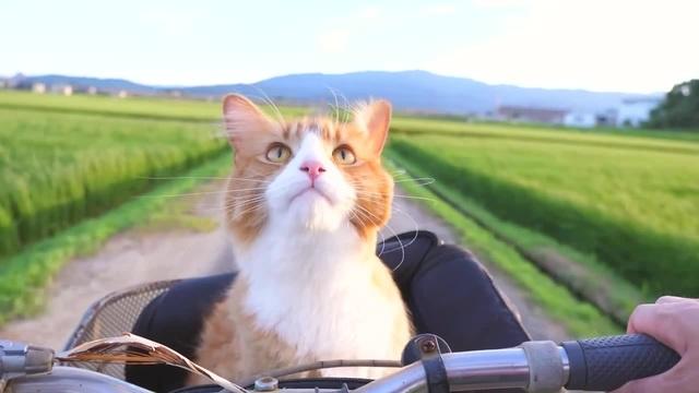 Позови кота с собой :3 (bring the cat with you)