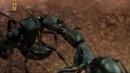Войны насекомых Империя под микроскопом Документальные фильмы National Geographic Nat Geo WILD