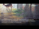 Стрит-арт во Владимире. Новые красивые места