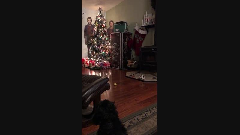 Собака против Винчестеров