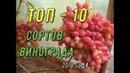 ТОП 10 сортов винограда Виноградник Вадима Точилина