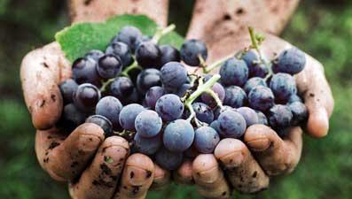 Подъем натурального вина привел к тому, что эти необычные бутылки стали одним из основных продуктов во многих самых известных ресторанах мира.