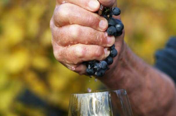 Натуральные вина, производимые виноделами, которые являются представителями «естественного виноделия», появились сравнительно недавно как продолжение органической и биодинамической практики в винограднике.