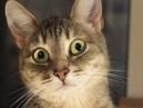 Kissa услышала, как Евген идёт домой