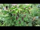 Полный обзор цветников Садовый архив 31 08 18