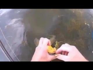 Самая бойкая рыба