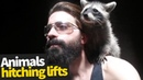 Animals Hitching Lifts | Hilarious Viral Video Compilation 2019