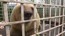 Zwei der traurigsten Bären Europas gerettet