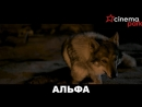 🎬«Альфа» драма, приключения, семейный, 12