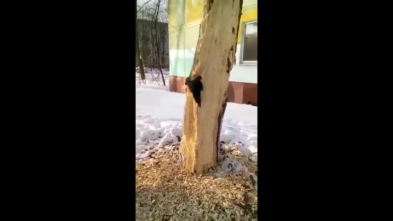 ...«Лесной доктор» со странностью.....