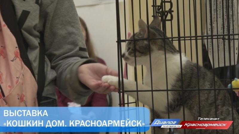 Выставка «Кошкин дом. Красноармейск»