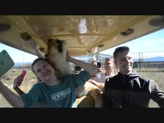 Ну что ,красивая ,поехали кататься львица -автоледи !