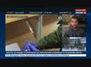 Подробности расследования в Керчи