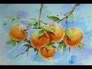 수채화 감 그리기Watercolor demo of persimmons 水彩画 Aquarell