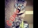 Приколы с котами - СМЕШНАЯ ОЗВУЧКА ЖИВОТНЫХ – УГАР ДО СЛЁЗ кот МУРЗИК – DOMI SHOW