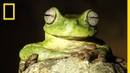 By Eavesdropping Underwater Scientists Hope to Capture Endangered Frog's Song