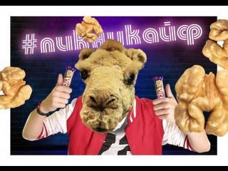 #ПИКНИКАЙФ: Вот это орех!