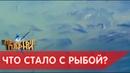 Рыбалка в Астрахани 2019.КУЧА РЫБЫ.