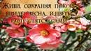 Живи сохраняя покой Придет весна и цветы распустятся сами