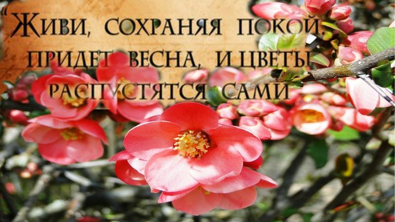 Живи, сохраняя покой. Придет весна, и цветы распустятся сами