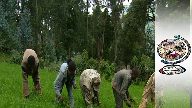 Why Are People Starving In Booming Ethiopia?
