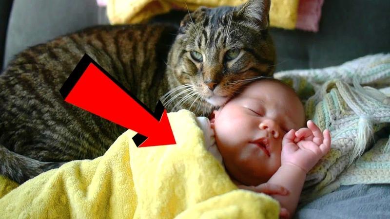 Бродячая кошка спасла брошенного на улице ребенка... Кошка залезла в коробку и прижалась к малышу.