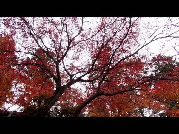 2014 楓京都PART2 日出 哲學之道 南禪寺
