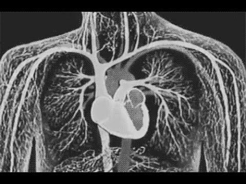 Раздвоение души Необъяснимые загадки трансплантологии Тайные знаки