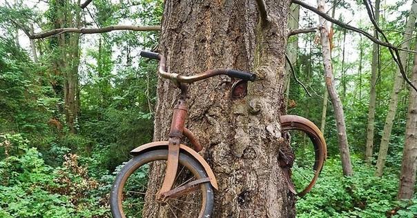 что на самом деле произошло с велосипедом, вросшим в дерево эта фотография, с детским велосипедом, вросшим в дерево, регулярно появляется в интернете, сопровождая трогательную историю о том, как