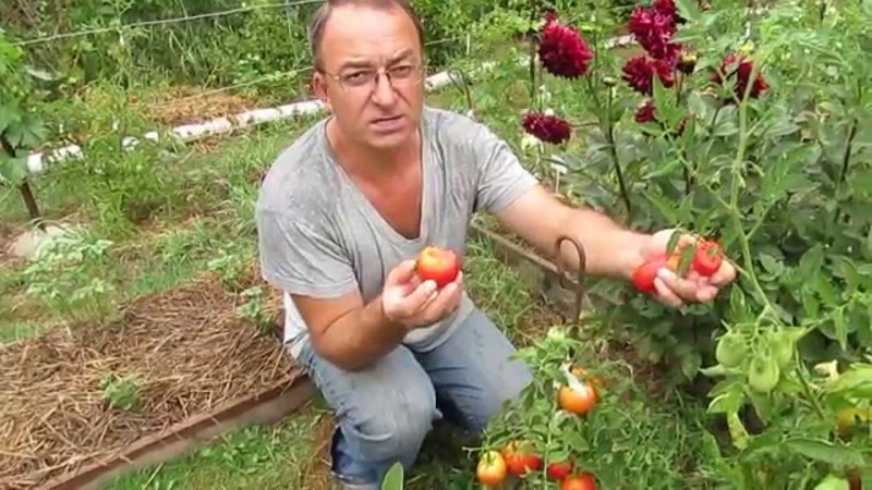 Обзор заморских сортов помидоров