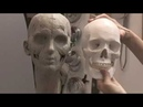 Introduction - FREE LESSON! - Creating a likeness in clay |