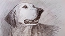 Member suggestions for a Dog Drawing