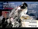 Судороги у 10-летнего африканского серого попугая / A 10-year-old African Grey Parrot has seizures