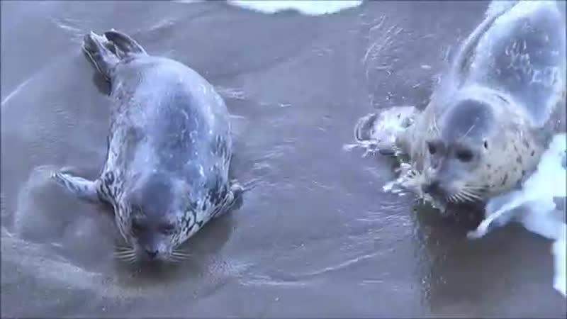 Тюлени и их малыши