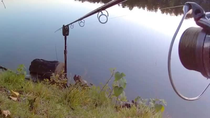 Неожиданная рыбалка! Красивые поклевки карпа! Мечта каждого рыбака. bite carp