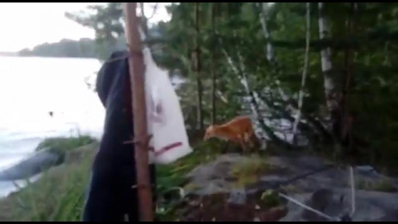 14 08 2018 Лисёнок на оз Таватуй Свердловсвая обл